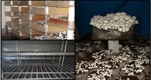Photo of انواع روشهای کشت قارچ دکمهای