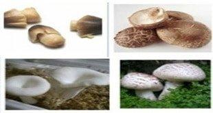 Photo of قارچ چیست؟