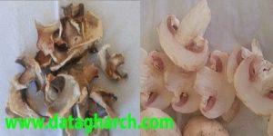 خشک کردن قارچ