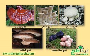 قارچ های خوراکی