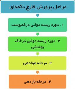 مراحل پرورش قارچ دکمه ای