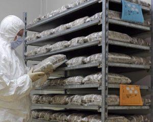 آزمایشگاه تولید اسپان قارچ