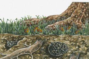 محل رشد قارچ دنبلان
