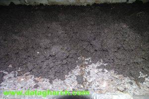خاکدهی در پرورش قارچ دکمه ای