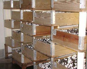 قفسه بندی چوبی پرورش قارچ