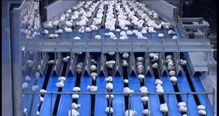 Mushroom-processing-line