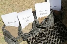 باگاس در تولید کمپوست قارچ