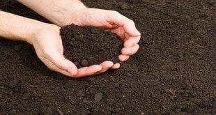 خاک دهی قارچ دکمه ای