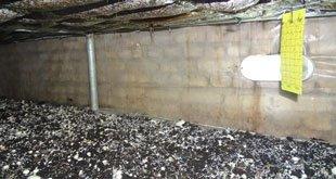 Photo of چگونه در منزل قارچ دکمه ای پرورش دهیم؟