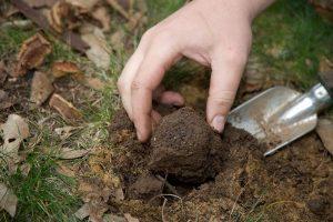 خاک مطلوب برای رشد ترافل