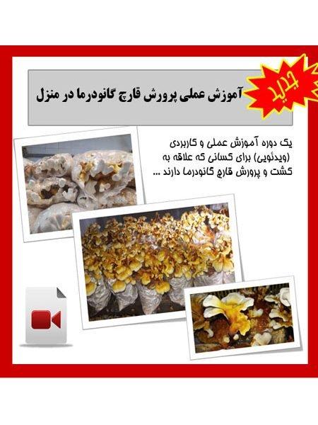 moarefi1 450x600 - آموزش پرورش قارچ گانودرما